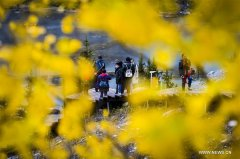 Autumn scenery of Kanas scenic area in NW Chinas Xinjiang